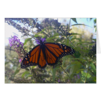 Monarch on Butterfly Bush Card