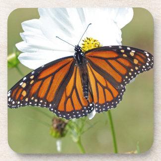 Monarch on Cosmos Coaster