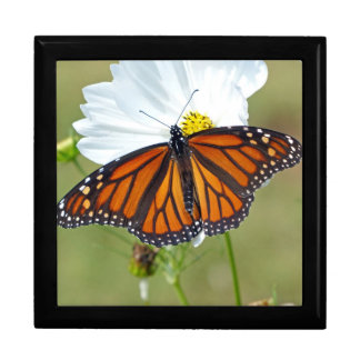 Monarch on Cosmos Gift Box