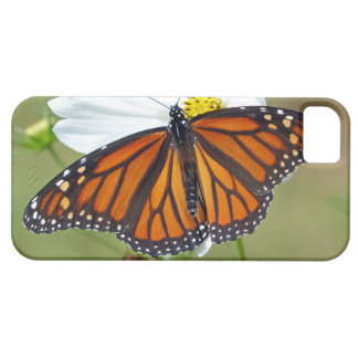 Monarch on Cosmos iPhone 5 Cases
