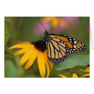monarch on flower card