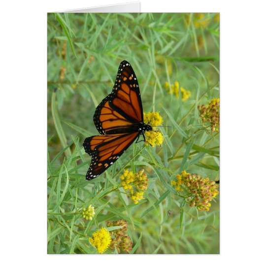 Monarch on Goldenrod Card