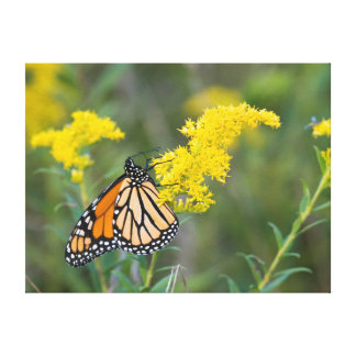 Monarch on Goldenrod Stretched Canvas Print
