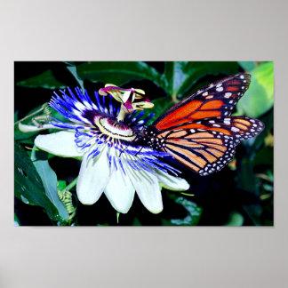 Monarch On Passionvine Poster