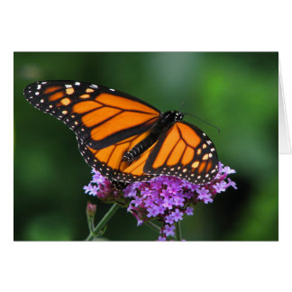 Monarch on Verbena Greeting Card