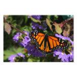 Monarch Photo