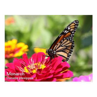 Monarch Postcard