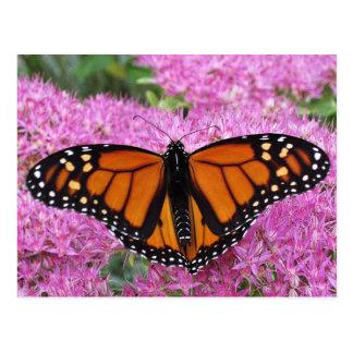 Monarch Wings on Pink - Butterfly Postcard