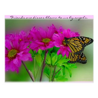 Monarchs and Daisies Postcard