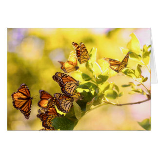 Monarchs in the Sunlight Card