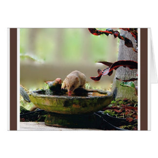 Mongoose Watering Hole Wildlife Note Card