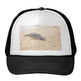 Monk Seal Sleeping Alone on Beach Mesh Hats