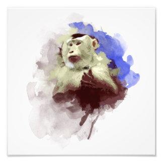 Monkey Art Photograph