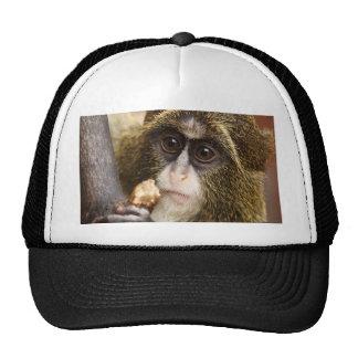 monkey baby trucker hat