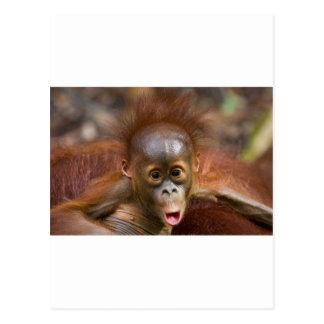 Monkey business 1 postcard