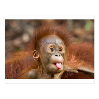 Monkey business 2 postcard