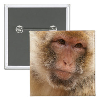 Monkey Face Square Pin