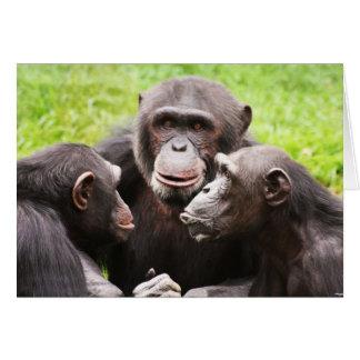 Monkey Gossip Card