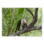 Monkey in the Jungle Greeting Card
