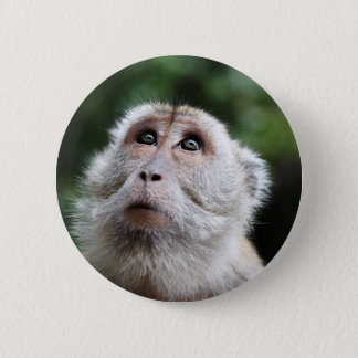 Monkey looking to the heavens 6 cm round badge