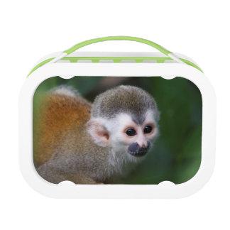 Monkey Photography Design Kids Lunch Box
