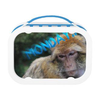Monkey sad about monday lunch box