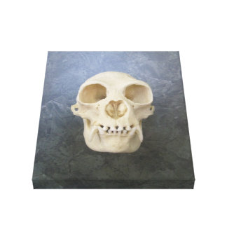 Monkey Skull Wrapped Canvas Stretched Canvas Prints