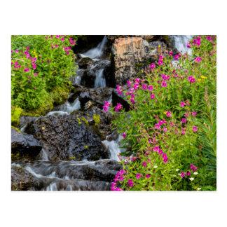 Monkeyflowers Along Lunch Creek In Glacier Postcard