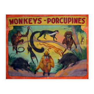 Monkeys and Porcupines Postcard