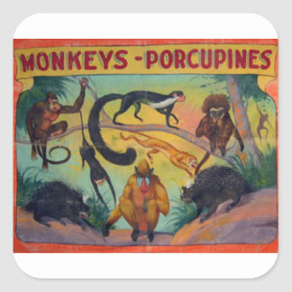 Monkeys and Porcupines Square Sticker