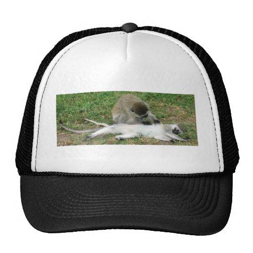 monkeys mesh hats