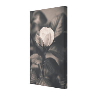 Monochromatic rose image canvas print