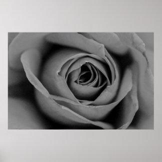 Monochromatic Rose Poster