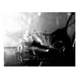 Monochrome Hermit Crab Photograph Postcard