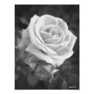 Monochrome Light Rose Print