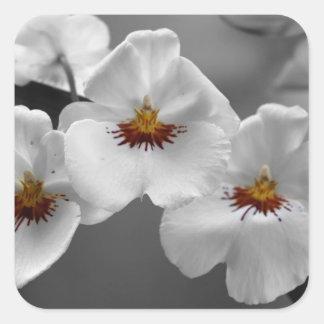 Monochrome Orchids Sticker