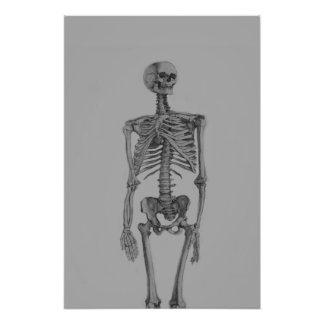 Monochrome Skeleton Skull Photo Art