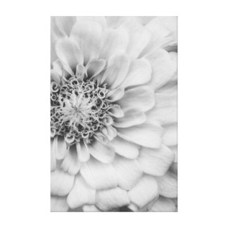 Monochrome Zinnia Flower Canvas