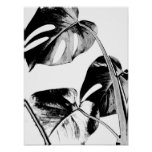 monstera palm leaves tropical black and white poster