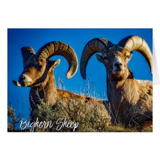 Montana Big Horn Sheep Blue Sky Card
