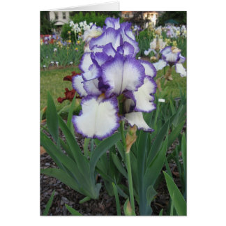 Montclair Iris Cards