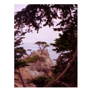 Monterey Postcard