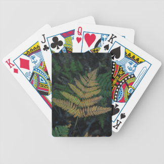Moody Fern in the Santa Cruz Forest Bicycle Playing Cards