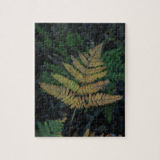 Moody Fern in the Santa Cruz Forest Jigsaw Puzzle