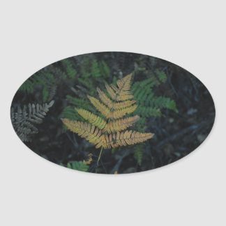 Moody Fern in the Santa Cruz Forest Oval Sticker