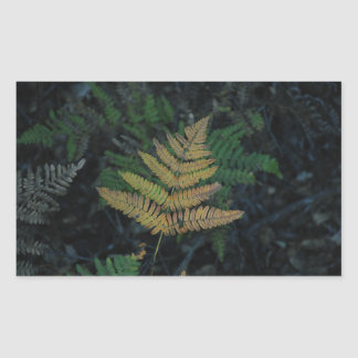 Moody Fern in the Santa Cruz Forest Rectangular Sticker