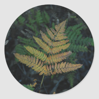 Moody Fern in the Santa Cruz Forest Round Sticker