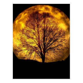 moon-and tree postcard