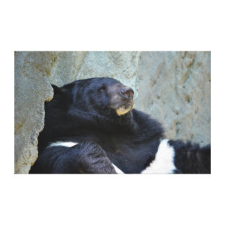 Moon Bear Canvas Prints