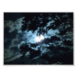 Moon Illuminates the Night behind Tree Branches Photo Print